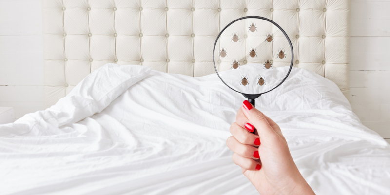 The first step in our bed bug treatment services is inspection